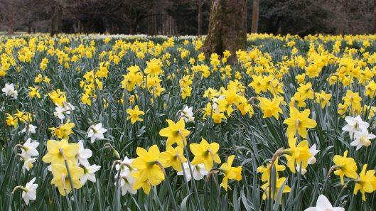 170318 Spring in Bute Park (7)