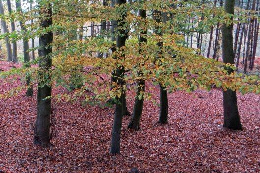 170321 Delamere Forest (1)