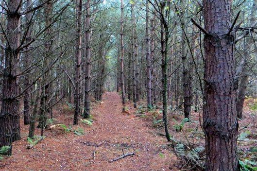 170321 Delamere Forest (2)