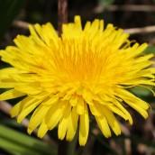 170328 weed or wildflower (1)