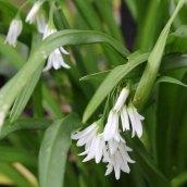 170328 weed or wildflower (2)