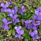 170328 weed or wildflower (4)