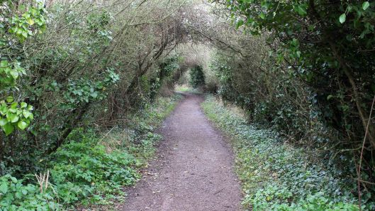 170401 Coastal Path flora