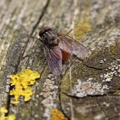 170401 Coastal Path insects (3)