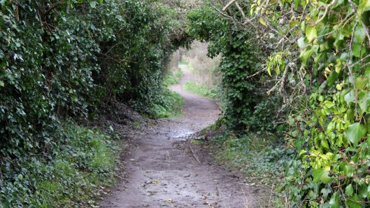 170401 Coastal Path