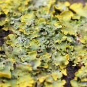 170401 Coastal Path lichens (2)