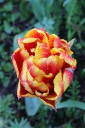 170407 Penarth station blooms (1)