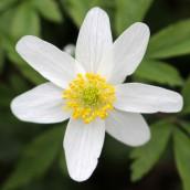 170407 spring flowers (1)