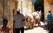170412 Moroccan donkeys horses mules (6)