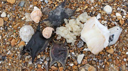 170522 Cuckmere Haven sea fauna