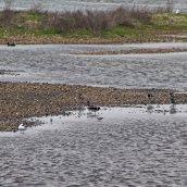 170524 Rye Harbour fauna (3)