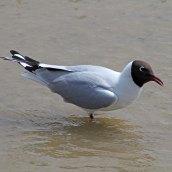 170524 Rye Harbour fauna (4)