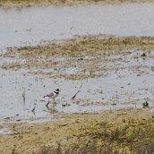 170524 Rye Harbour fauna (5)
