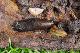170531 6 slugs