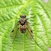 170702 Fly