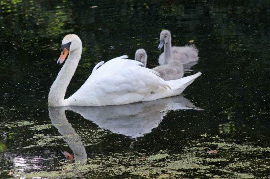 170710 bird babies (1)