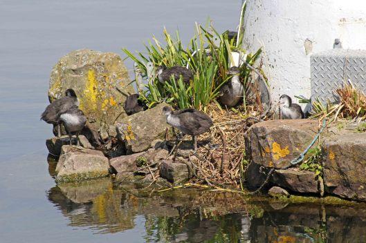 170710 bird babies (5)