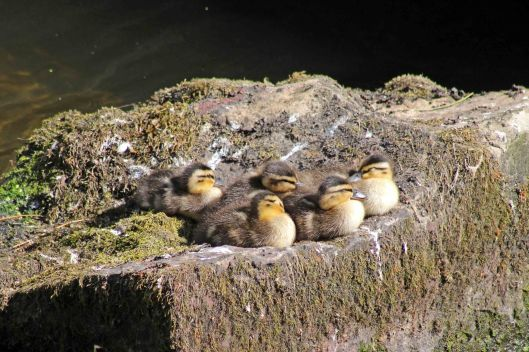 170710 bird babies (6)