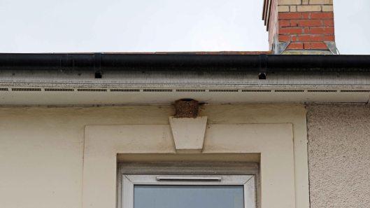 170723 House martin nest (1)