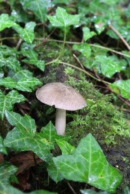 170808 Mushroom (3)