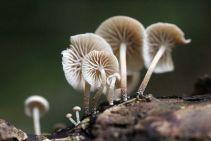 170808 Mushroom (6)