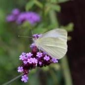 170903 Small white