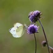 170916 Small white