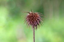 170926 seeds (1)