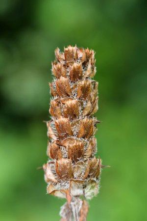 170926 seeds (2)