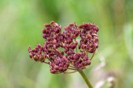 170926 seeds (3)