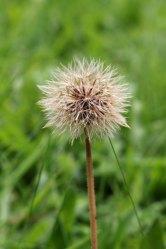 170926 seeds (4)