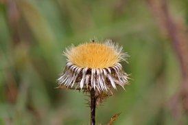 170926 seeds (5)