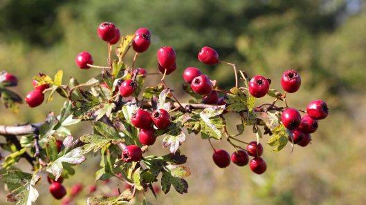 171002 fruit (1)