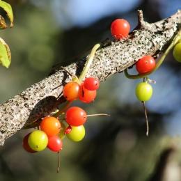 171002 fruit (2)