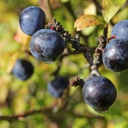 171002 fruit (3)