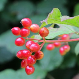 171002 fruit (7)
