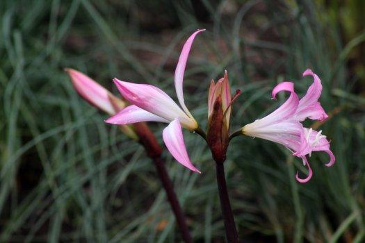 171006 October pinks (7)