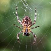 171008 spider (1)