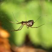 171008 spider (2)