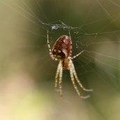 171008 spider (3)
