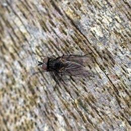 171012 fly (1)