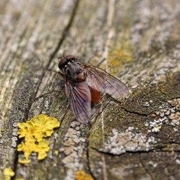171012 fly (2)
