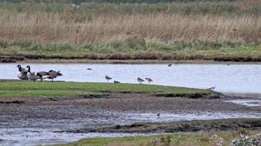 171019 Various birds