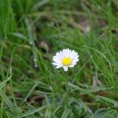 171105 Daisy