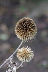171107 seeds (1)
