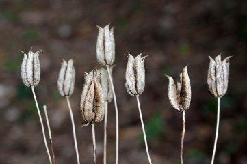 171107 seeds (2)
