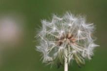 171107 seeds (4)