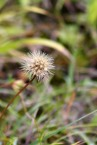 171107 seeds (6)