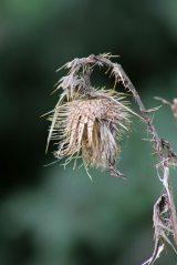 171107 seeds (8)