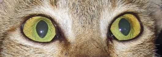 171114 6 Cat